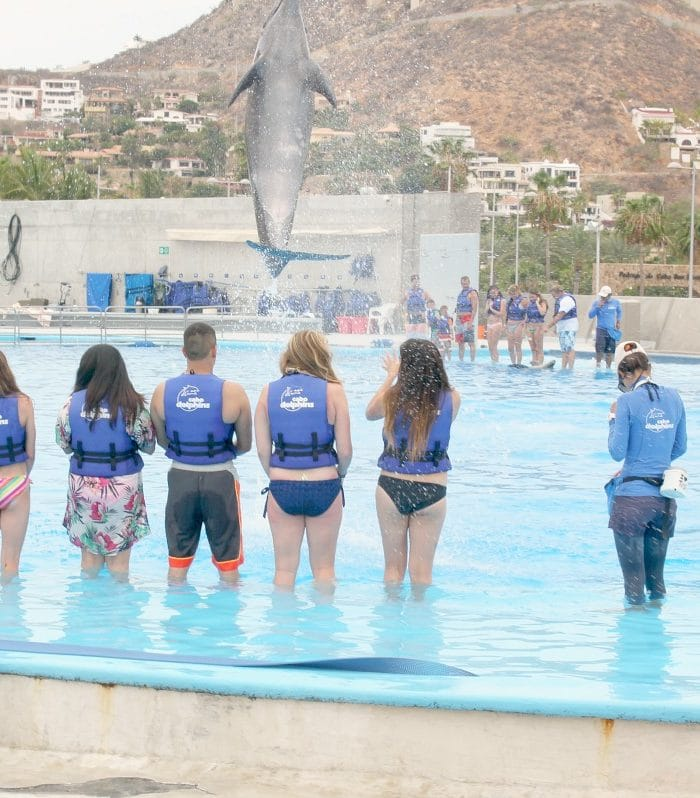 Swimming With Dolphins | Cabo Adventures