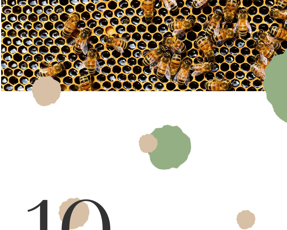 10 Proven Health Benefits of Manuka Honey