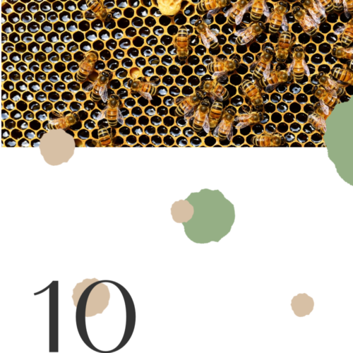 10 Health Benefits of Manuka Honey
