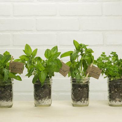 Start a Mason Jar Garden + Free Printable Labels