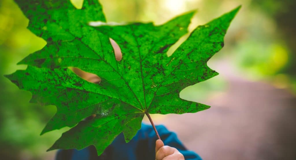 giant leaf with a little kid