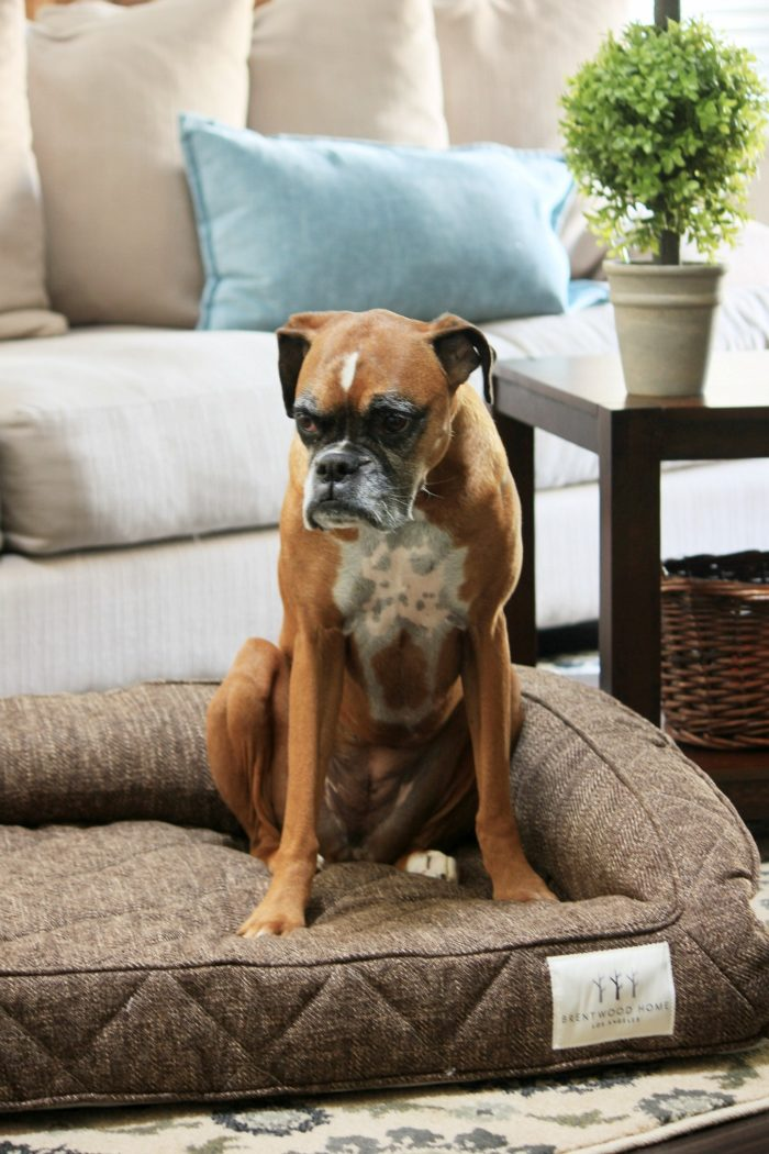 Guest Post: Dealing with Shedding Dogs – Tips for a Clean Home