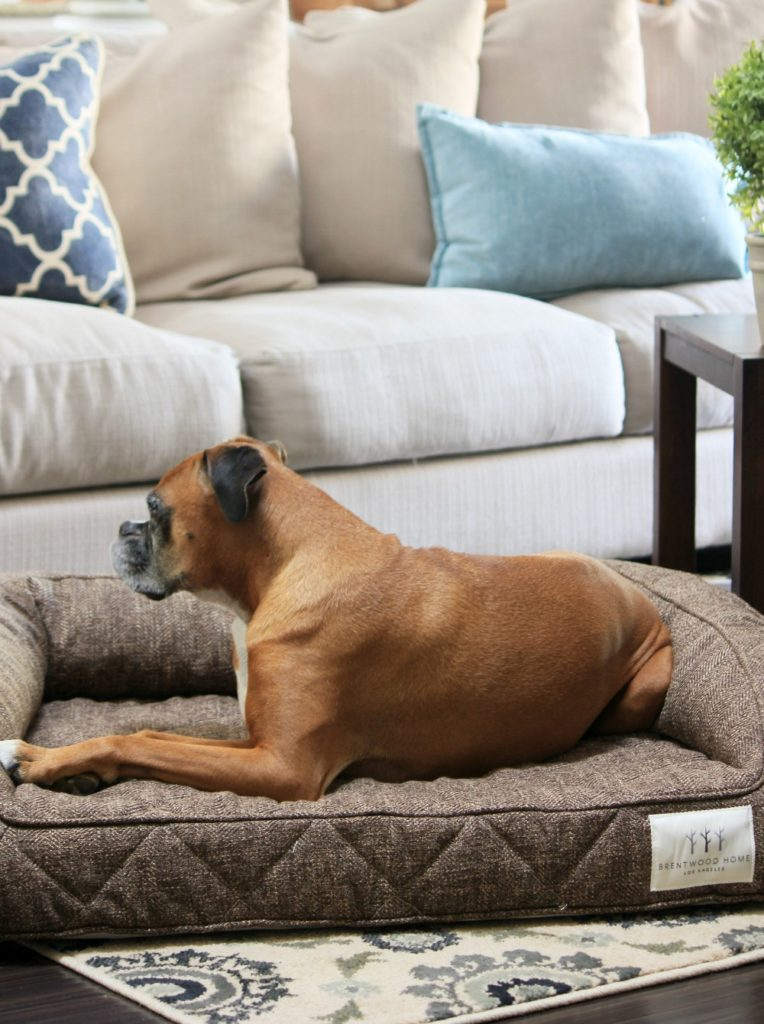 Dog Beds That Look Like Furniture Brentwood Home Runyon Bed The