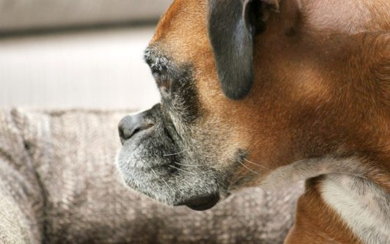What Breed of Dog Is Right For Your Family