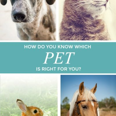 Which Pet is Right for You?