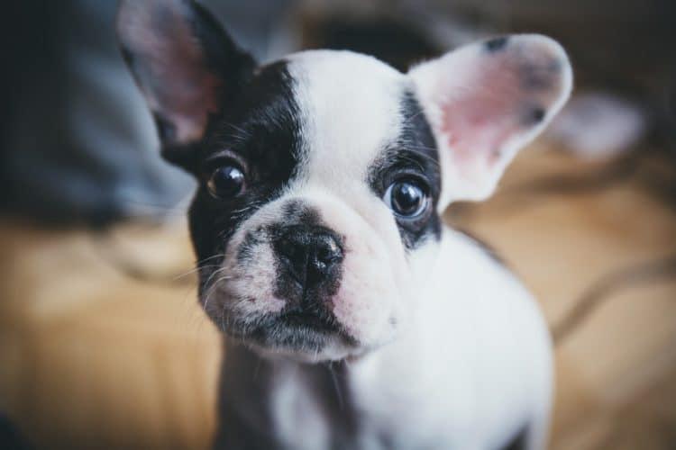 Be a Good Puppy Parent