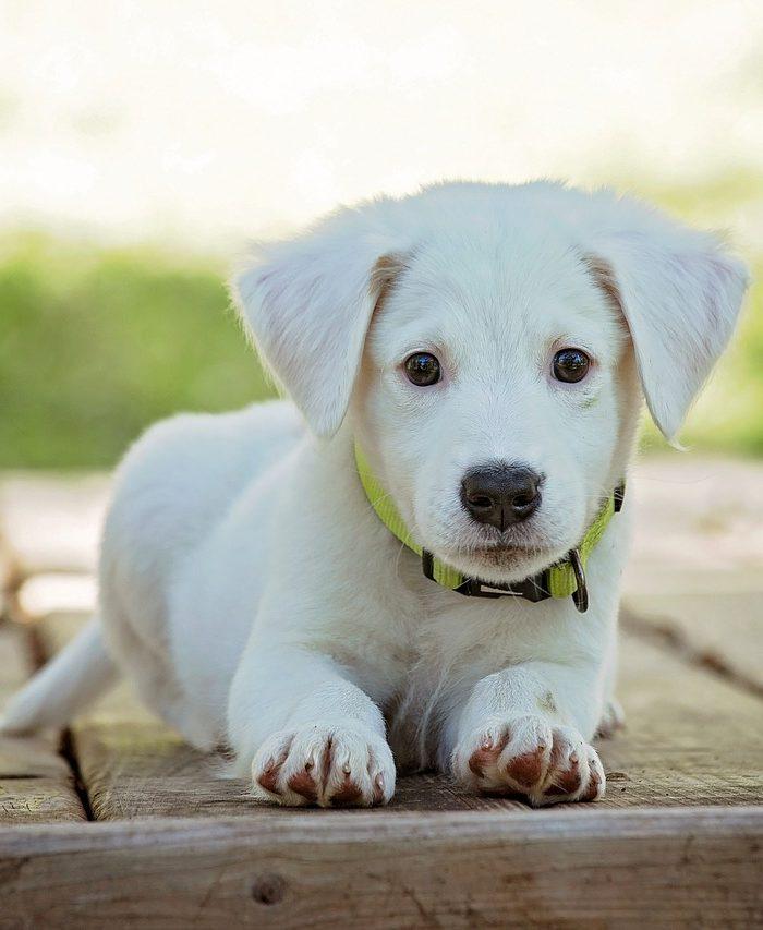 Puppy Problems: When Work Training Doesn't Work