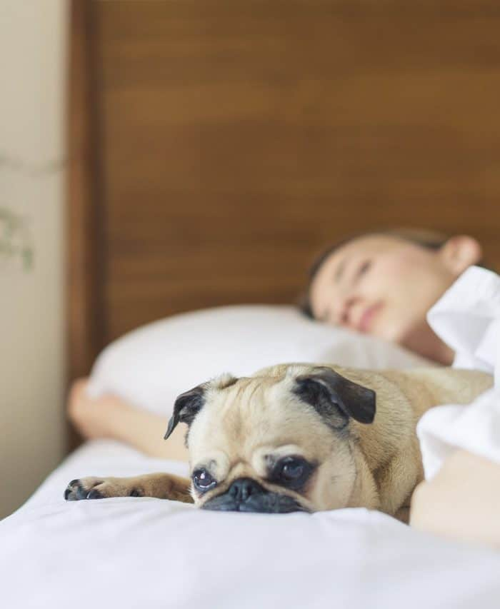 Snatching More Sleep: Here's Why You Need Your Z's!