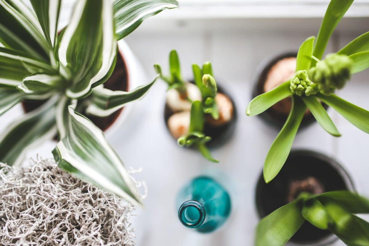 Inexpensive Ways To Spruce Up Your Home For Spring